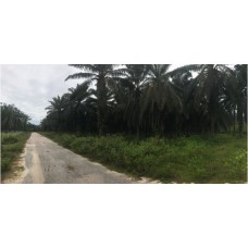 Real Estate & Land at Freehold agriculture land for sale in Ipoh Country Park, Gopeng